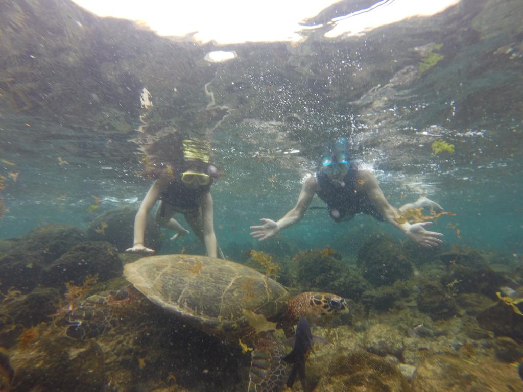 tartaruga enorme que vimos na Enseada das Caeiras